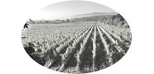 Bodega-Winery-Arts